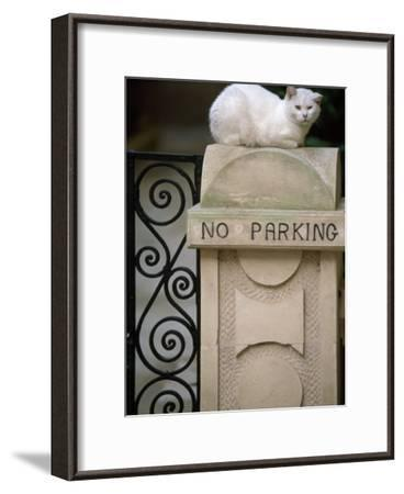 "White Cat Sits on a ""No Parking"" Sign-Michael Melford-Framed Photographic Print"