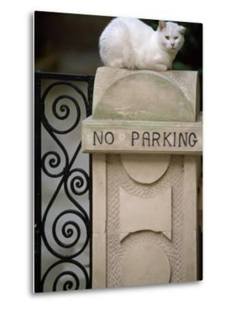 "White Cat Sits on a ""No Parking"" Sign-Michael Melford-Metal Print"