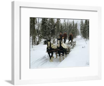 Loggers Haul Freshly Cut Timber on a Horse-Drawn Sleigh-B^ Anthony Stewart-Framed Photographic Print