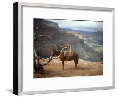 Saddled Mule and Scenic View of the Grand Canyon-David Edwards-Framed Photographic Print