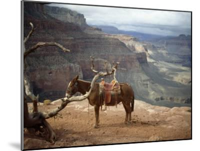 Saddled Mule and Scenic View of the Grand Canyon-David Edwards-Mounted Photographic Print