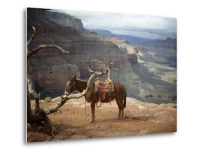 Saddled Mule and Scenic View of the Grand Canyon-David Edwards-Metal Print
