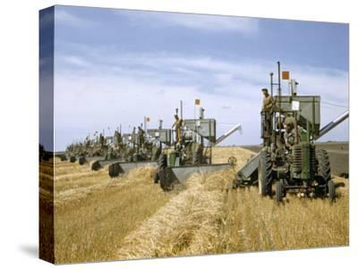 Men Drive Combines in Diagonal Line Through Golden Grain Fields-Jack Fletcher-Stretched Canvas Print
