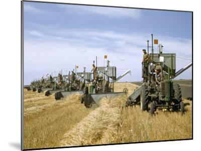 Men Drive Combines in Diagonal Line Through Golden Grain Fields-Jack Fletcher-Mounted Photographic Print