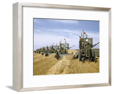 Men Drive Combines in Diagonal Line Through Golden Grain Fields-Jack Fletcher-Framed Photographic Print