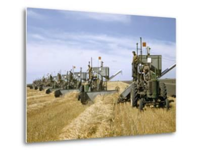 Men Drive Combines in Diagonal Line Through Golden Grain Fields-Jack Fletcher-Metal Print