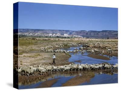 Shepherd Walks Amid Large Flock of Sheep Standing in and around River-Justin Locke-Stretched Canvas Print