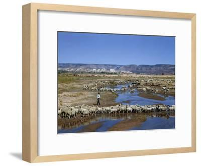 Shepherd Walks Amid Large Flock of Sheep Standing in and around River-Justin Locke-Framed Photographic Print
