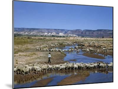 Shepherd Walks Amid Large Flock of Sheep Standing in and around River-Justin Locke-Mounted Photographic Print