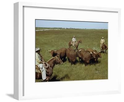 Rancher and Cowboys Inspect Grass-Fattened Steers-Justin Locke-Framed Photographic Print