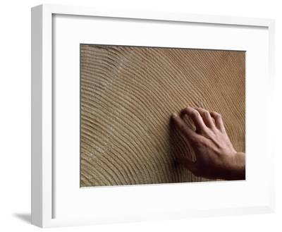 Man's Hand Traces the Rings of an Very Large, Old Tree-Michael Melford-Framed Photographic Print