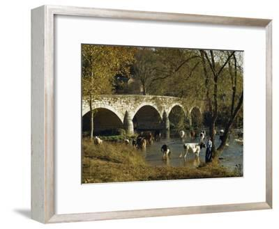 Boy Fishes in a River Near Wading Cows and Old Stone Bridge-Joseph Baylor Roberts-Framed Photographic Print