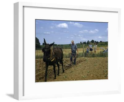 Children Watch a Farmer and His Mule Cultivate a Tobacco Field-William Gray-Framed Photographic Print