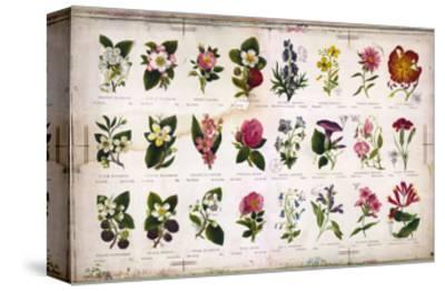 Vintage Botanical--Stretched Canvas Print