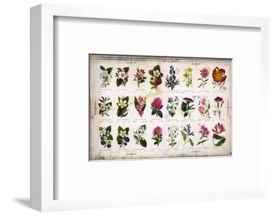 Vintage Botanical--Framed Art Print