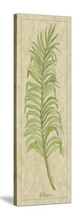 Palmae Leaf-Alicia Ludwig-Stretched Canvas Print