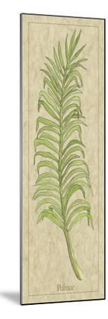Palmae Leaf-Alicia Ludwig-Mounted Art Print