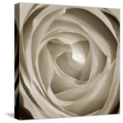 Rose Dawn II-Renee W^ Stramel-Stretched Canvas Print