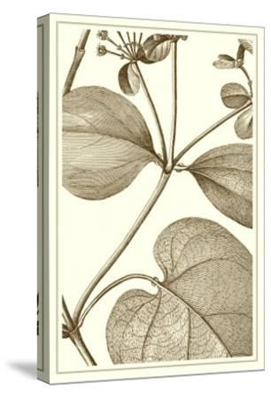 Cropped Sepia Botanical V--Stretched Canvas Print
