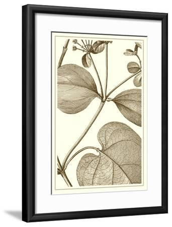 Cropped Sepia Botanical V--Framed Art Print