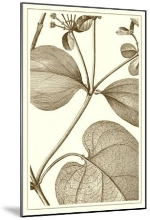 Cropped Sepia Botanical V--Mounted Art Print