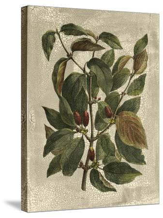 Deshayes Tree II-Gerard Paul Deshayes-Stretched Canvas Print
