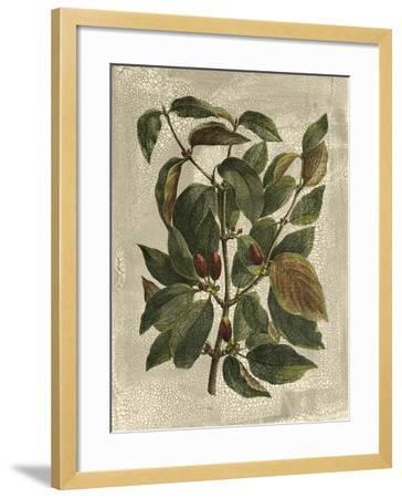 Deshayes Tree II-Gerard Paul Deshayes-Framed Art Print