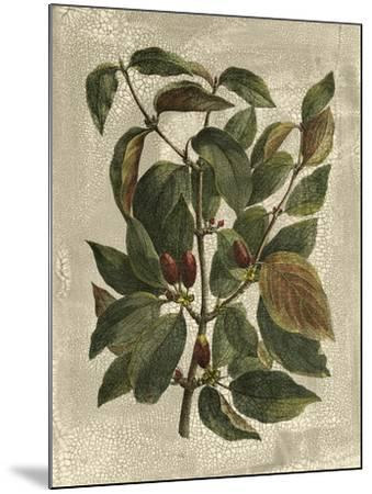 Deshayes Tree II-Gerard Paul Deshayes-Mounted Art Print