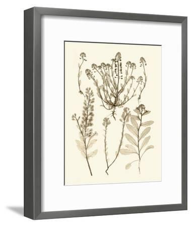 Sepia Nature Study III-Vision Studio-Framed Art Print