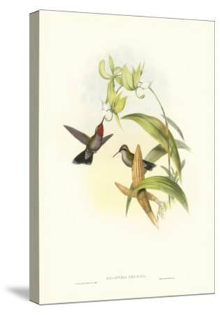 Hummingbird IV-John Gould-Stretched Canvas Print