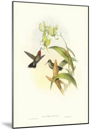 Hummingbird IV-John Gould-Mounted Art Print