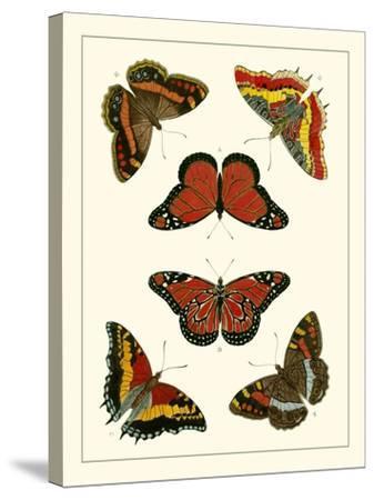 Butterflies I-Pieter Cramer-Stretched Canvas Print