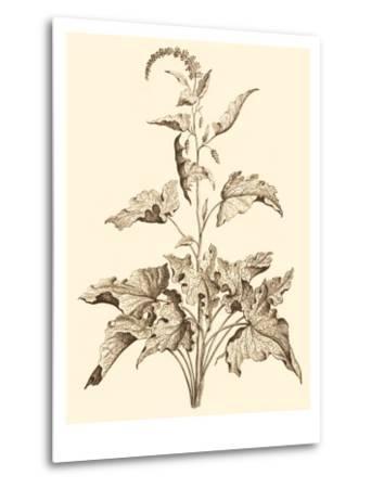 Sepia Munting Foliage II-Abraham Munting-Metal Print