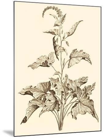 Sepia Munting Foliage II-Abraham Munting-Mounted Art Print