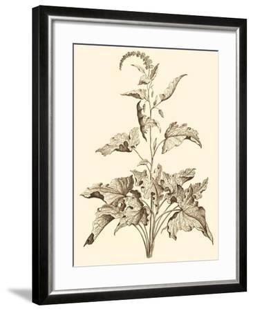 Sepia Munting Foliage II-Abraham Munting-Framed Art Print