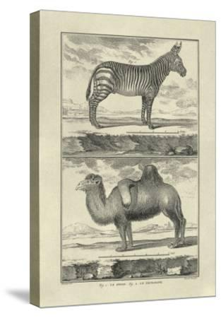 Zebra and Camel-Denis Diderot-Stretched Canvas Print