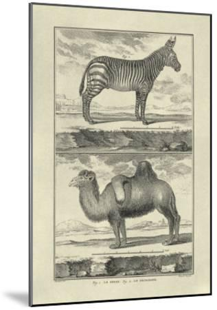 Zebra and Camel-Denis Diderot-Mounted Art Print