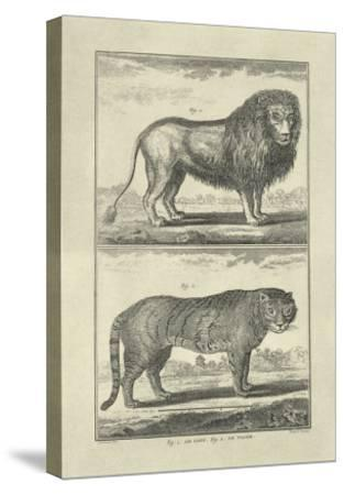 Lion and Tiger-Denis Diderot-Stretched Canvas Print