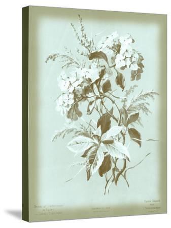Dussurgey Hydrangea on Blue-Dussurgey-Stretched Canvas Print