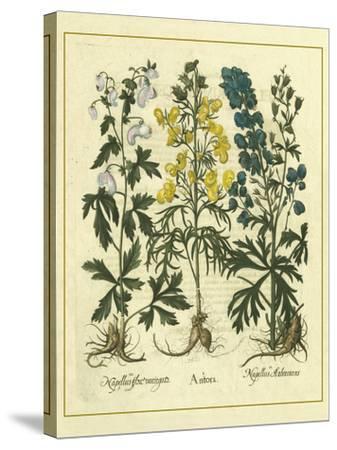 Besler Floral I-Besler Basilius-Stretched Canvas Print