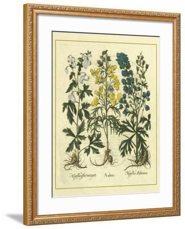 Besler Floral I-Besler Basilius-Framed Art Print