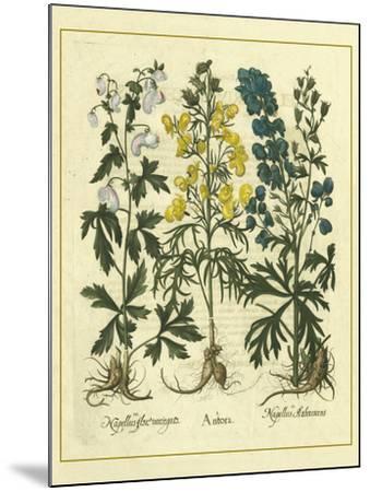 Besler Floral I-Besler Basilius-Mounted Art Print