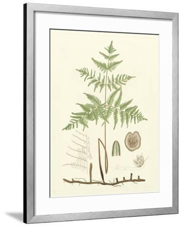 Eaton Ferns III-Daniel C^ Eaton-Framed Art Print