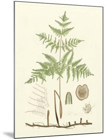 Eaton Ferns III-Daniel C^ Eaton-Mounted Art Print