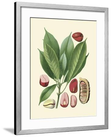 Botanical Glory VI-Vision Studio-Framed Art Print