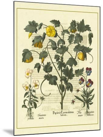 Besler Floral VI-Besler Basilius-Mounted Art Print
