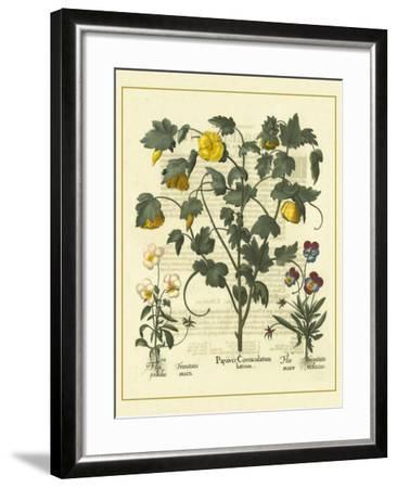 Besler Floral VI-Besler Basilius-Framed Art Print