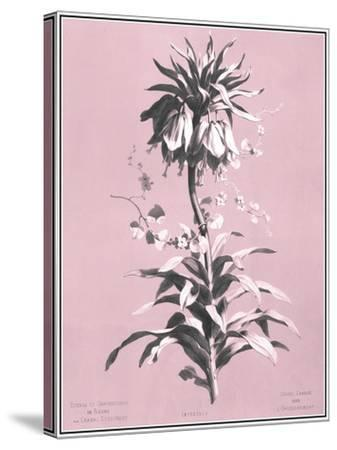 Dussurgey Imperiale on Pink-Dussurgey-Stretched Canvas Print