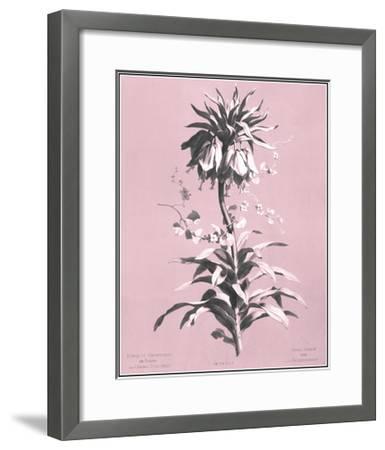Dussurgey Imperiale on Pink-Dussurgey-Framed Art Print