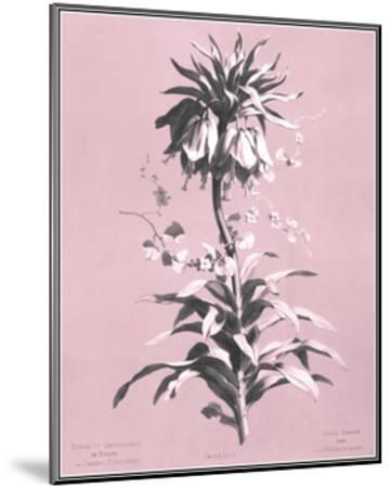 Dussurgey Imperiale on Pink-Dussurgey-Mounted Art Print